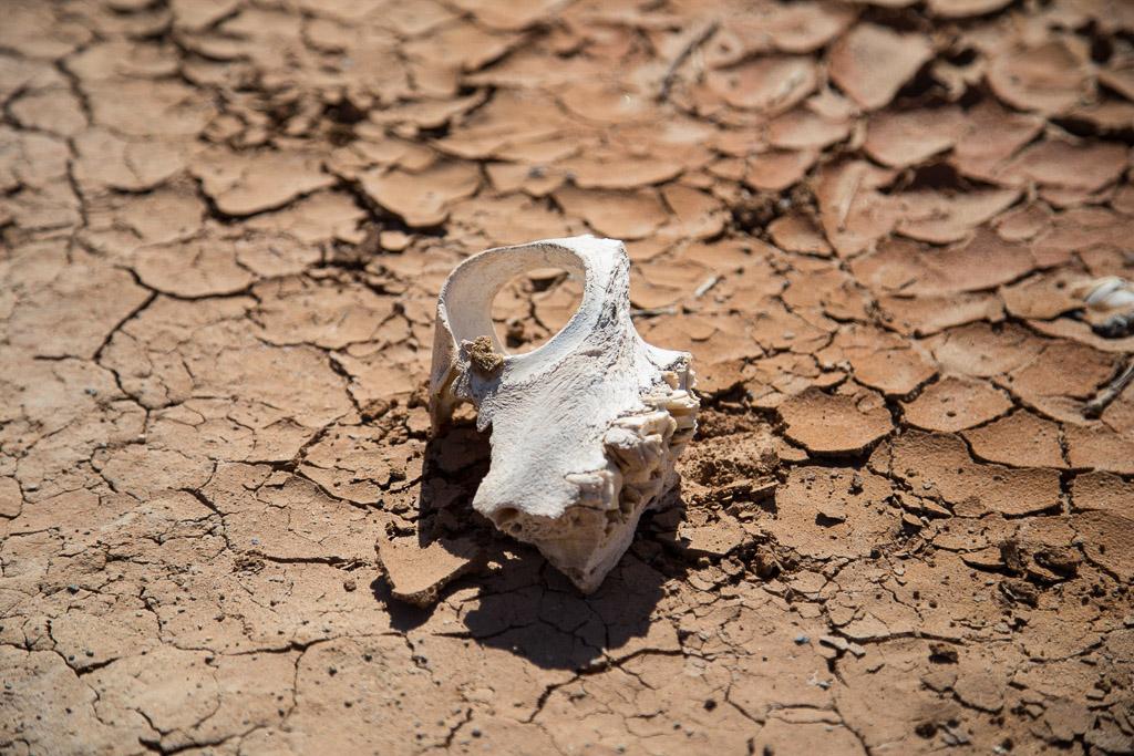 Gobi Desert - Dinosaur Bones