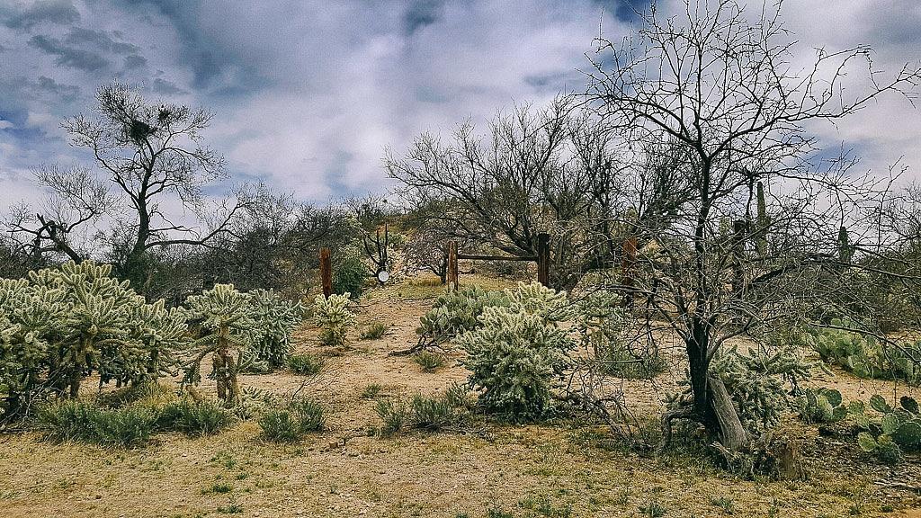 Tucson Sonora Desert Arizona