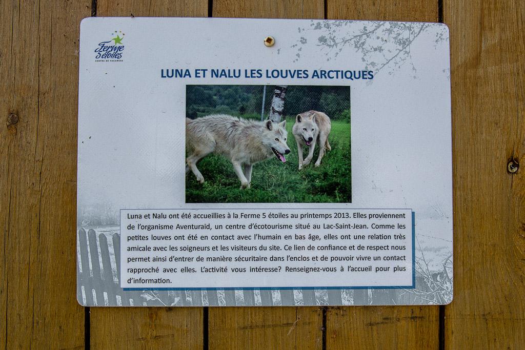 Arctic Wolves Ferme 5 Etoiles Quebec, Canada