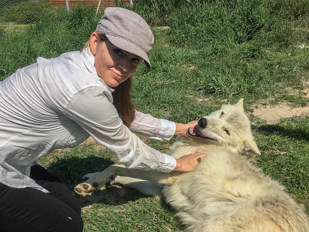 Juliana Dever arctic wolf Ferme 5 Etoiles Quebec Canada