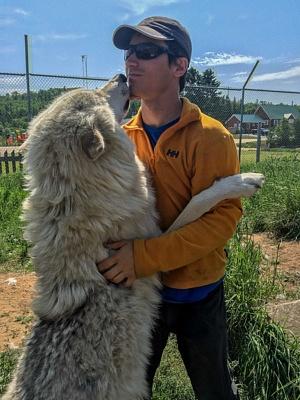 Arctic Wolf Derek Ferme 5 Etoiles Saguenay Canada