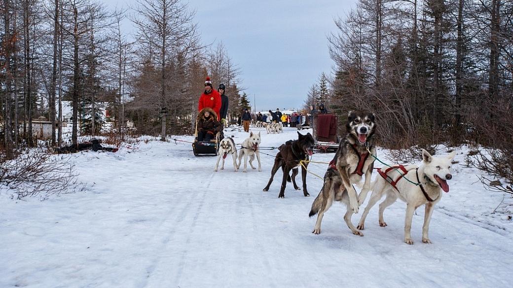 Dog Sledding - Churchill Manitoba trip