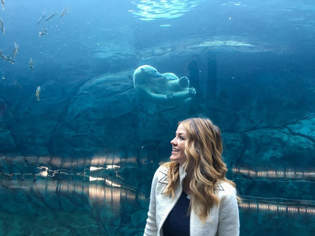 Juliana Dever Polar Bear Winnipeg Zoo
