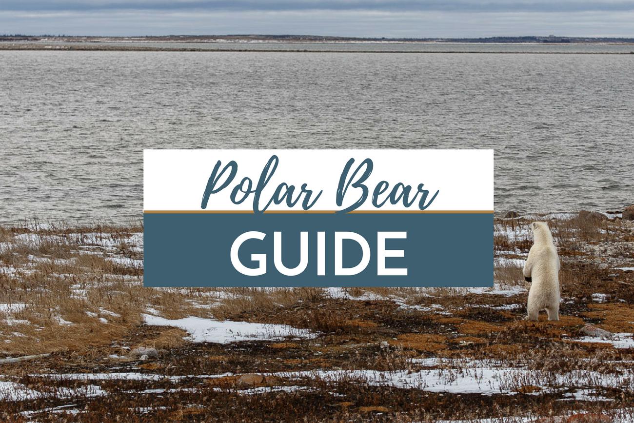 Manitoba Polar Bear Guide